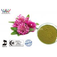 Quality Green Fine Powder Natural Botanical Extracts , Red Clover Leaf Extract Balance Female Estrogen for sale