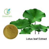 Weight loss Plant Extract Powder , Lotus Leaf Extract Powder with Nuciferine Powder
