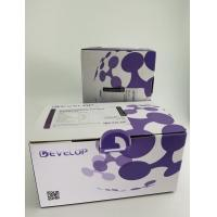 Buy cheap Phosphatase 3 Protein Assay Kit Regulatory Subunit 1 PPP3R1 Reactivity from wholesalers