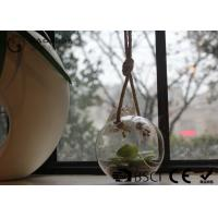 Quality Clear Glass Hanging Terrarium / Hanging Glass Plant Holders Anti Corrosion for sale