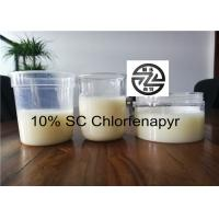 Quality C15H11BrClF3N2O Chlorfenapyr 10 SC / CAS 122453-73-0 Long Effective Period for sale