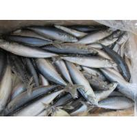 China New Landing Grade A Quality Frozen Whole Round Pacific Mackerel Fish Food for Sale. on sale