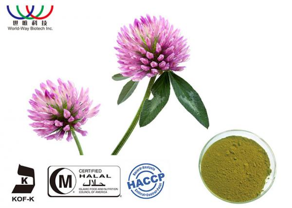 Buy Natural Organic Red Clover Extract Balance Estrogen Pharmaceutical Grade at wholesale prices