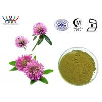 Quality Water Soluble Red Clover Extract Pharmaceutical Grade Treatment For Indigestion for sale