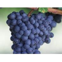 Anthocyanins Grape seed extract