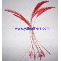 Quality Loose feather / fancy feather for sale